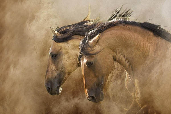 Wall Art - Photograph - Brothers Of The Wind by Ron  McGinnis