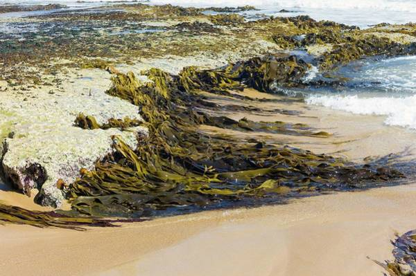 High Tide Photograph - Brown Algae On A High Energy Shoreline by Dr Jeremy Burgess/science Photo Library