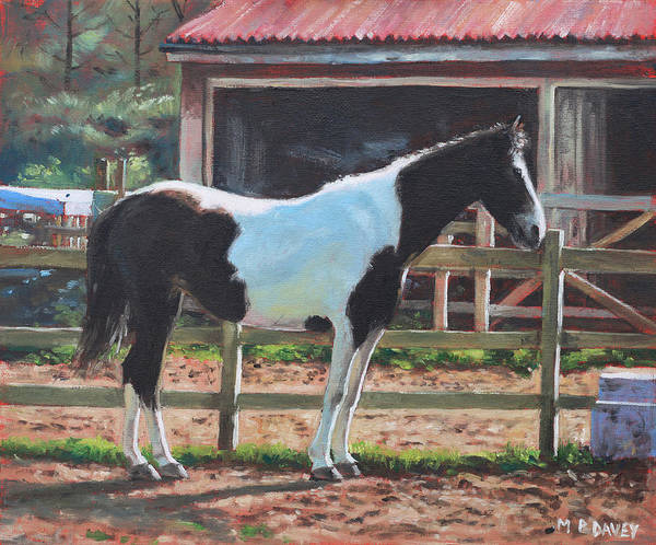 Painting - Brown And White Horse By Stable by Martin Davey