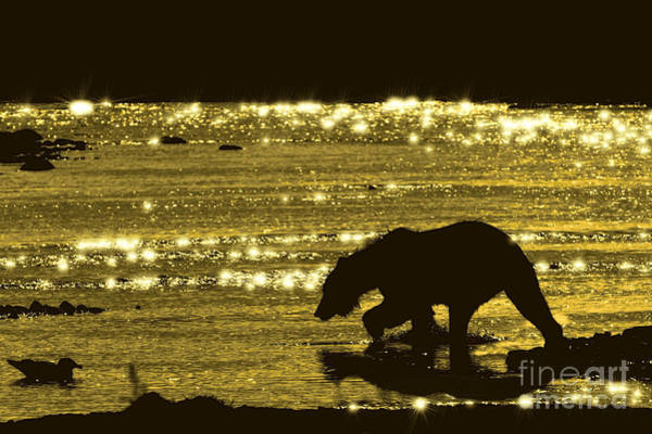Photograph - Brown Bear Searching Salmon In Evening by Dan Friend