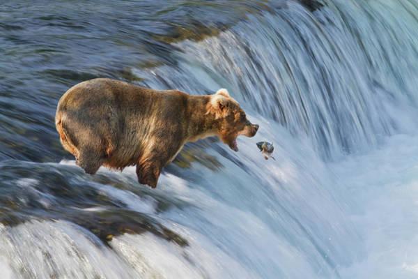 Shutter Speed Photograph - Brown Bear  Ursus Arctos by Gary Schultz
