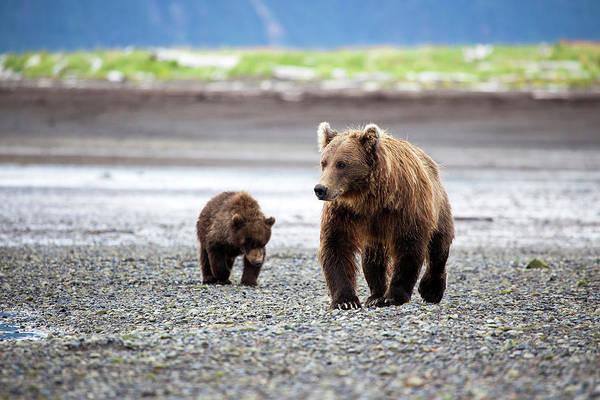 Born In The Usa Photograph - Brown Bears In Katmai by Daniel A. Leifheit
