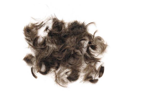 Photograph - Brown Hair White Background by Matthias Hauser