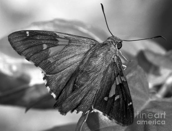 Wall Art - Photograph - Brown Moth On Basil Leaf by Iris Richardson