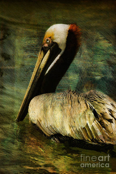Photograph - Brown Pelican Beauty by Deborah Benoit
