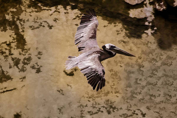 Digital Art - Brown Pelican In Flight by Photographic Art by Russel Ray Photos