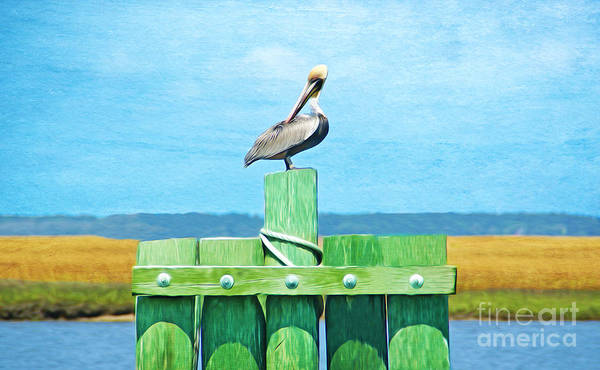 Brown Pelicans Wall Art - Photograph - Brown Pelican by Laura D Young