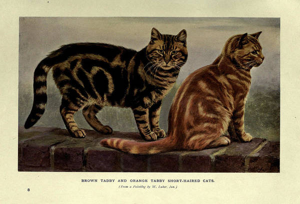 Manx Cat Wall Art - Painting - Brown Tabby And Orange Tabby Cats by Philip Ralley