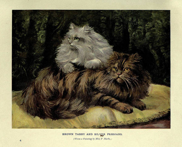 Manx Cat Wall Art - Painting - Brown Tabby And Silver Persian by Philip Ralley
