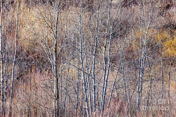 Leafless Tree Wall Art - Photograph - Brown Winter Forest With Bare Trees by Elena Elisseeva