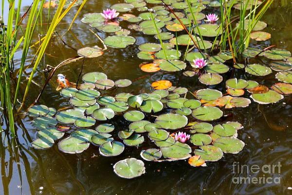 In Bruges Photograph - Bruges Lily Pond by Carol Groenen