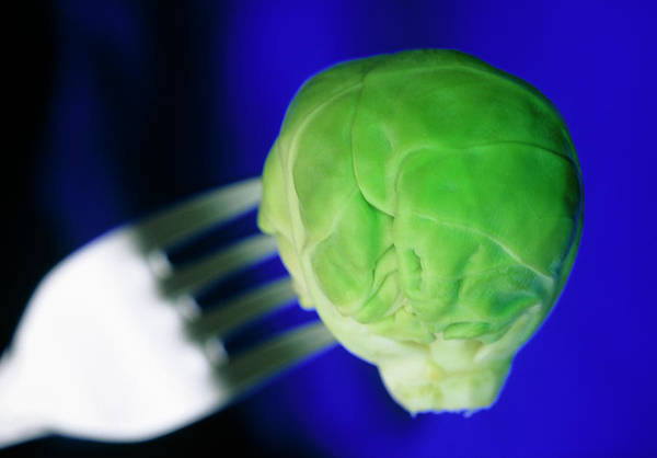 Wall Art - Photograph - Brussel Sprout On Fork by Steve Taylor/science Photo Library