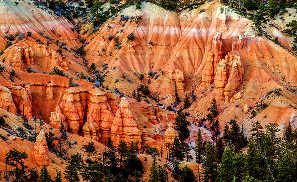 Photograph - Bryce Canyon Detail by TL  Mair