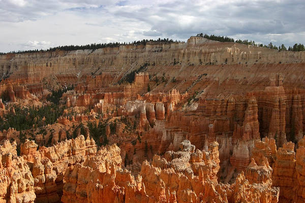 Photograph - Bryce Canyon Hoodoos by Wes and Dotty Weber