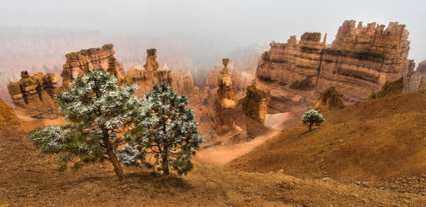 Cliff Photograph - Bryce Canyon National Park by Larry Marshall