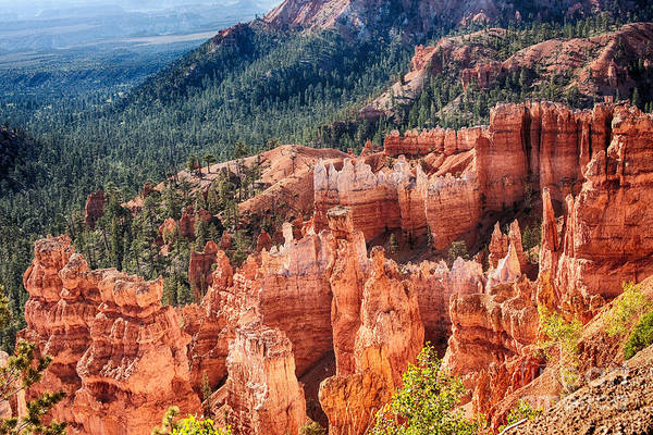 Photograph - Bryce Canyon Utah Views 24 by James BO Insogna