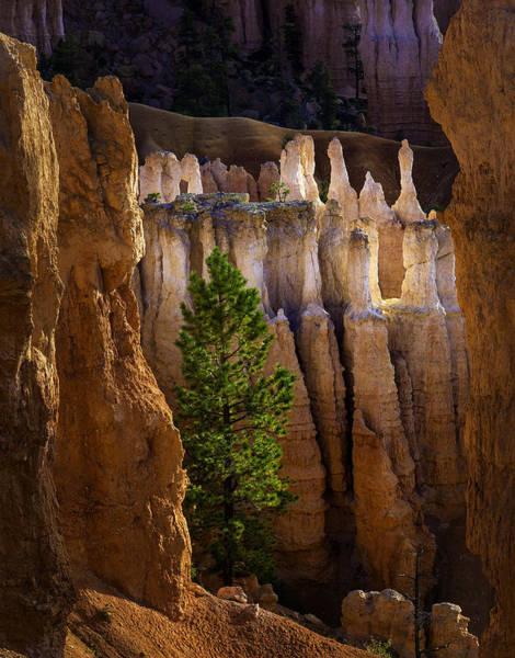 Photograph - Bryce Illuminated by Michael Ash