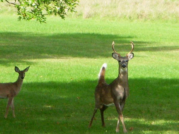 Mendon Photograph - Buck And Doe by Aimee L Maher ALM GALLERY
