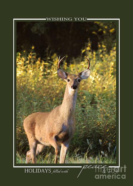 Photograph - Buck At Sunrise Deer Christmas Cards by Jai Johnson