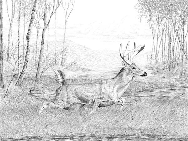 Drawing - Buck by Carl Genovese