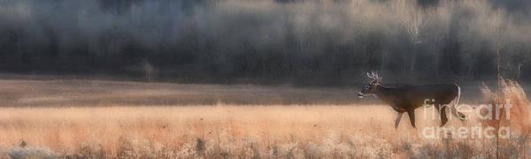 Photograph - Buck Whitetail Deer Crossing Field by Dan Friend
