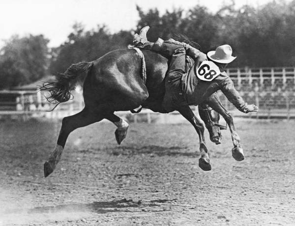 Black Buck Photograph - Bucked Off On Bronco Ride by Underwood Archives