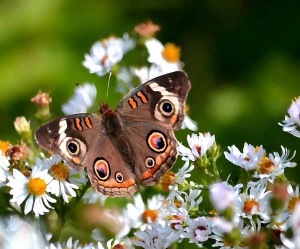 Buckeye Butterfly Wall Art - Photograph - Buckeye #2 by Deena Stoddard