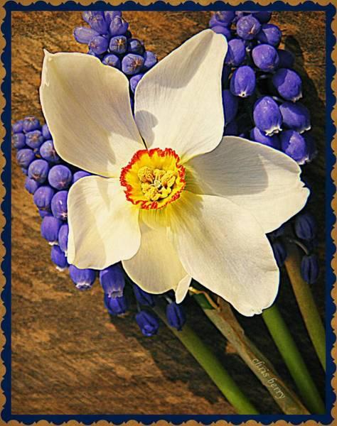 Wall Art - Photograph - Buckeye And Grape Hyacinth by Chris Berry