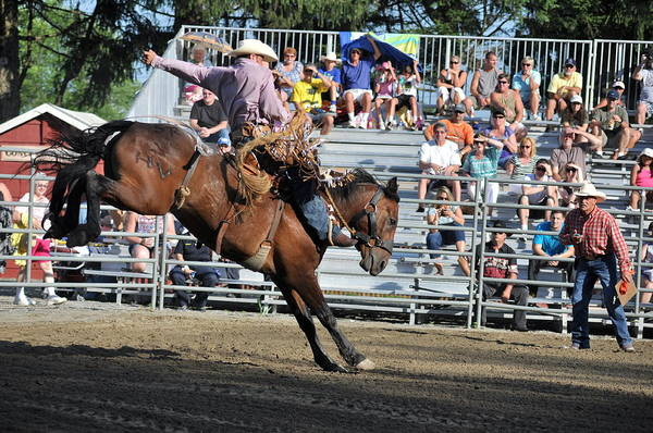 Mission Viejo Photograph - Bucking Bronco by Gary Keesler