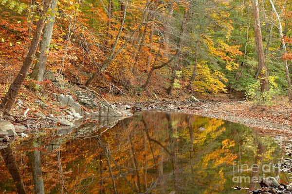 Photograph - Bucks County Reflections by Adam Jewell