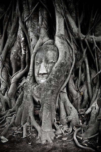 Art And Craft Photograph - Buddha Head Wrapped In A Tree by Traveler1116
