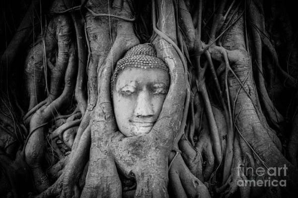 Wall Art - Photograph - Buddha In The Banyan Tree by Dean Harte