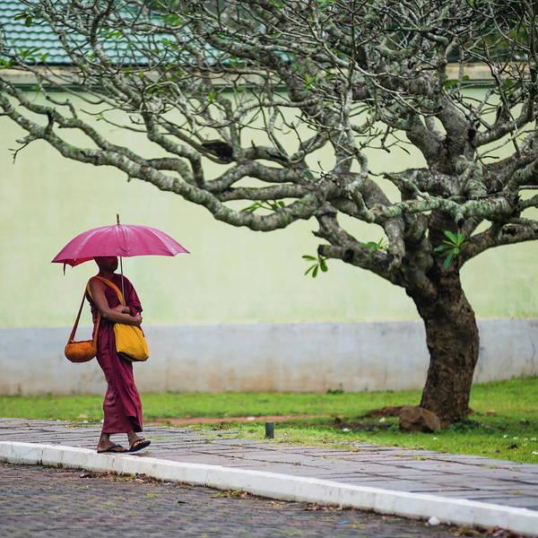 Real People Photograph - Buddhist Monk At Sri Maha Bodhi In The by Matthew Williams-ellis / Robertharding