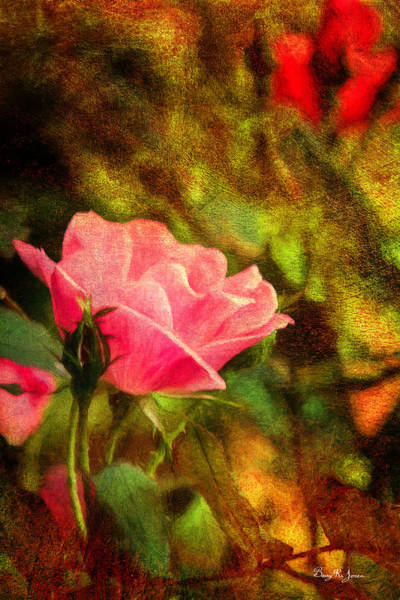 Photograph - Floral - Rose - Budding Beauty by Barry Jones