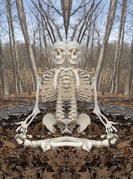 Skeletal System Photograph - Budding Buddies by Betsy Knapp
