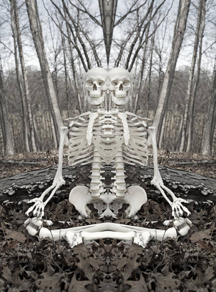 Skeletal System Photograph - Budding Buddies II by Betsy Knapp