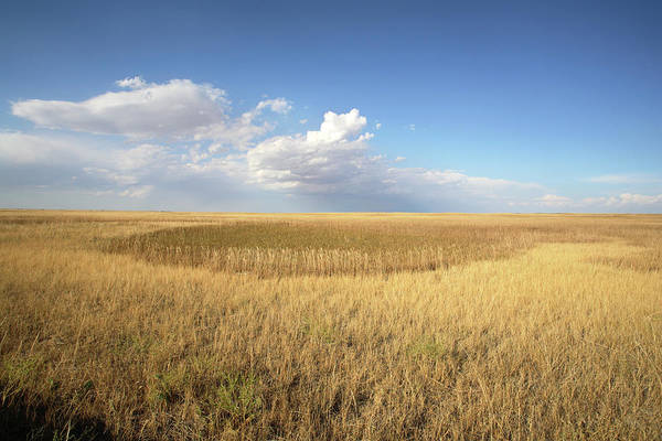 South Buffalo Photograph - Buffalo Gap National Grassland by Peter Falkner/science Photo Library