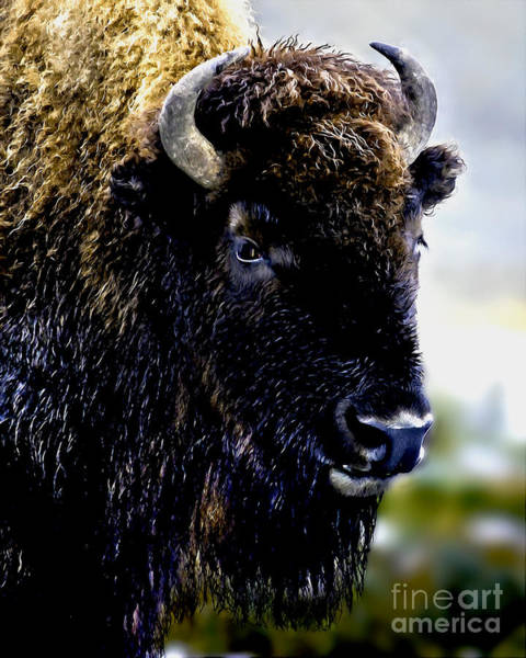 Painting - Buffalo In Yellowstone National Park by Bob and Nadine Johnston