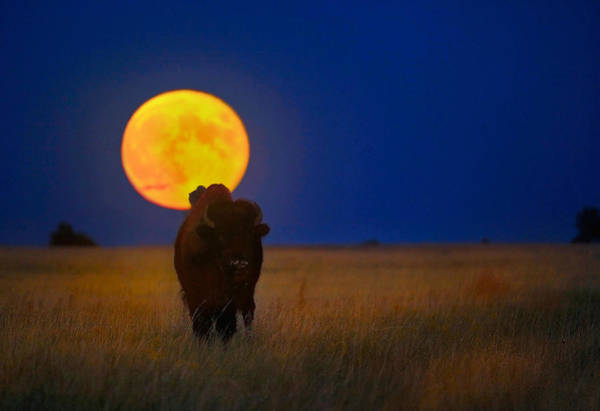 South Buffalo Photograph - Buffalo Moon by Kadek Susanto