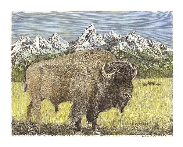 Beautiful Park Drawing - Buffalo Of Yellowstone National Park by Jack Pumphrey