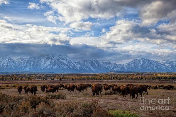 Photograph - Buffalo Run by Jim Garrison