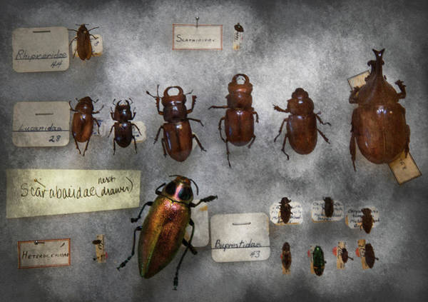 Photograph - Bug Collector - The Insect Collection  by Mike Savad