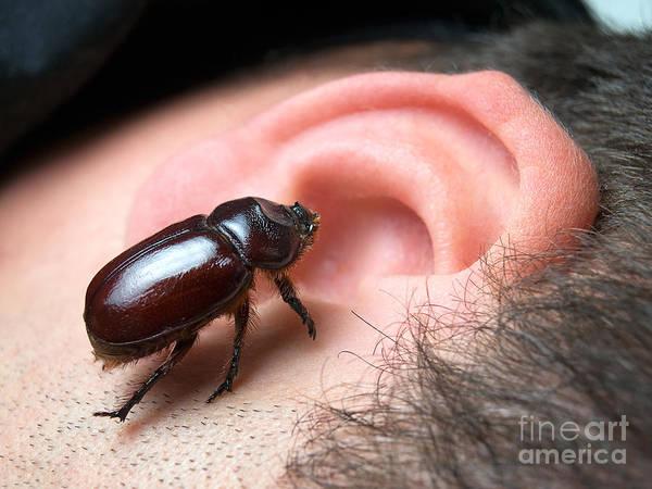 Bug Man Photograph - Bug In The Ear by Sinisa Botas
