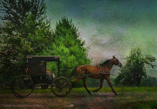Amish Country Digital Art - Buggy Travel by Tricia Marchlik