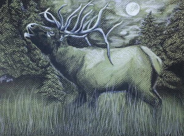 Bugling Drawing - Bugling by Melissa Sink