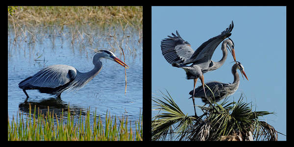 Photograph - Building Our Nest by Dawn Currie
