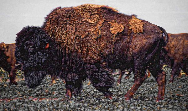 Wall Art - Digital Art - Bull Buffalo by Daniel Hagerman