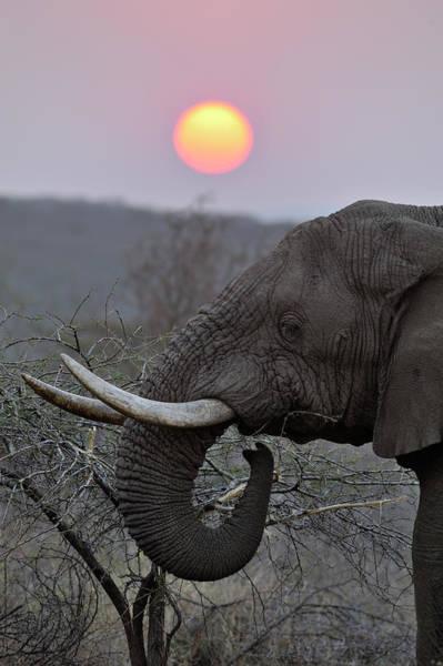 Safari Animal Photograph - Bull Elephant Against Setting Sun by Emil Von Maltitz