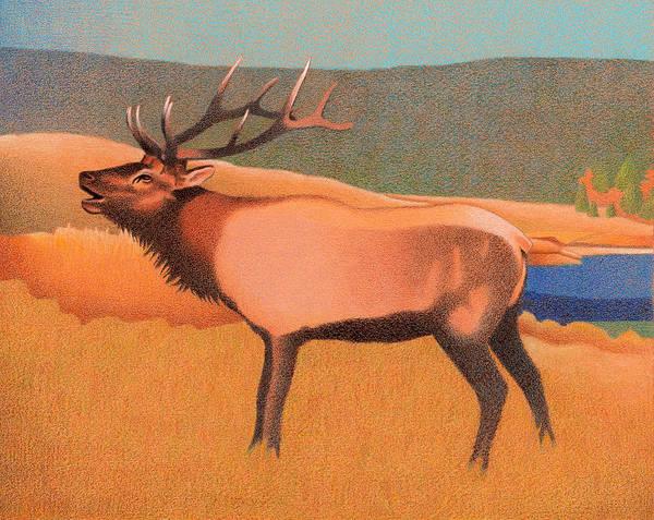 Drawing - Bull Elk by Dan Miller