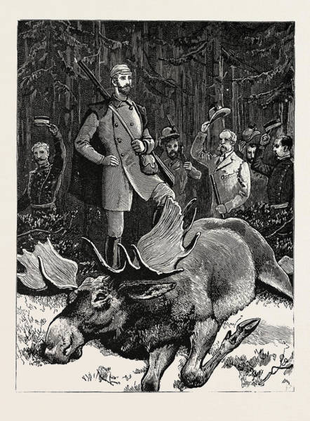 Elk Mountain Drawing - Bull Elk Killed By The Crown Prince Of Sweden At Hunneberg by Swedish School